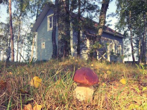 sxoVYVyjvcA - Строительство финского домика - коттеджный поселок